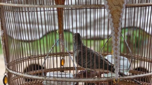 tauben und traditionellen vogelkäfige. - käfig stock-videos und b-roll-filmmaterial