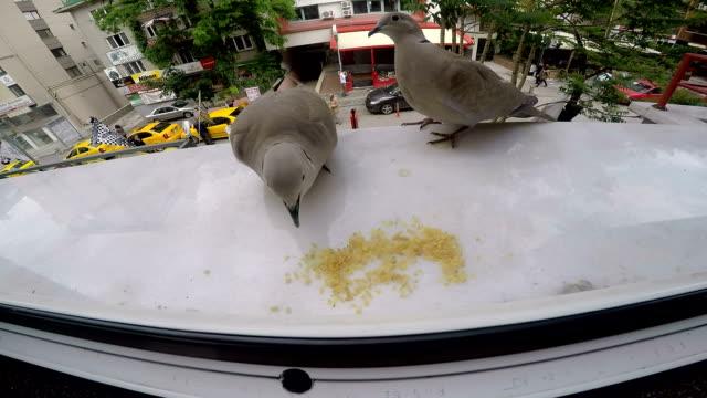 vídeos de stock e filmes b-roll de pombas de alimentação - peitoril de janela