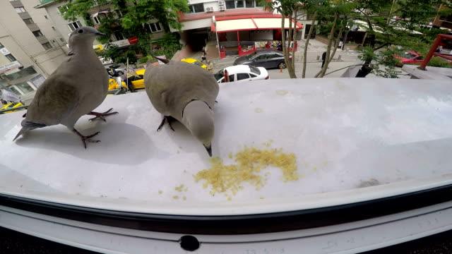 Doves Feeding