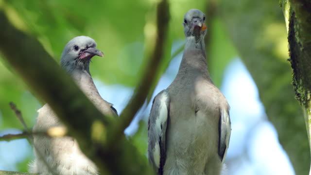 Doves in a garden.