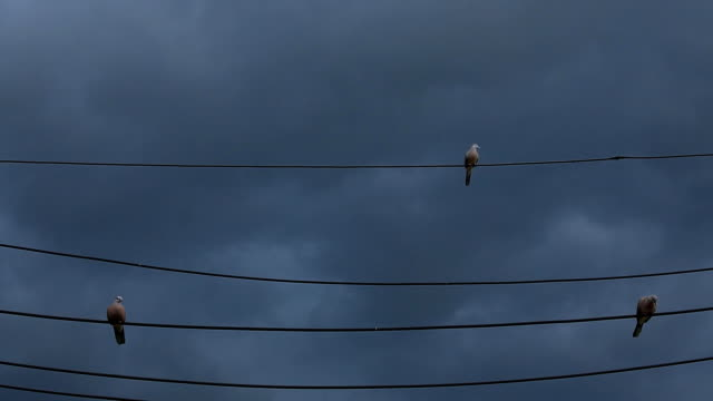 vídeos y material grabado en eventos de stock de palomas en líneas de alta tensión y toma de - boca de animal
