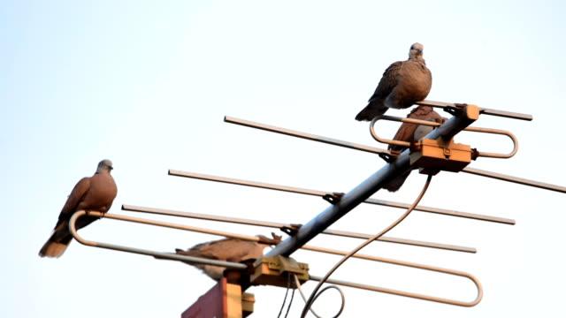 vidéos et rushes de colombes sur antenne tv - télévision haute définition