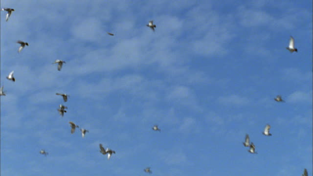 doves released during remembrance ceremony fly through sky over seated audience below available in hd. - colomba video stock e b–roll