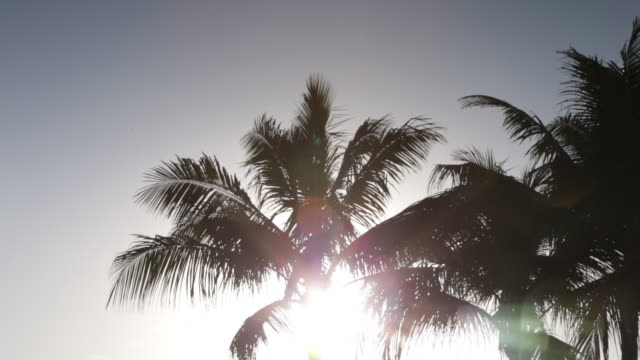 PAN down Sunlight silhouetting palm trees early morning