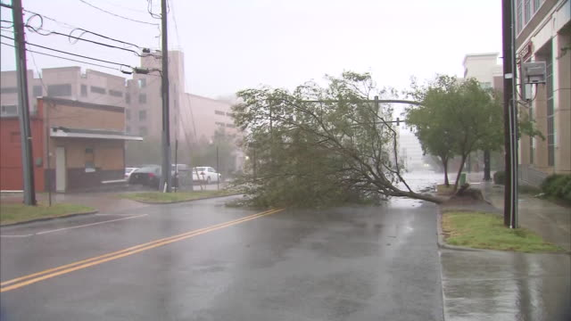 downed tree blocks a roadway during hurricane florence in wilmington, north carolina on september 14, 2018. - wilmington north carolina stock videos & royalty-free footage