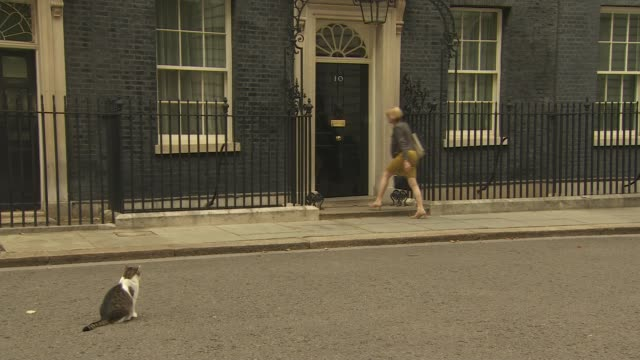 downing street arrivals for cabinet and conservative party garden party england london downing street various men and women arriving / larry the cat... - damian hinds stock videos and b-roll footage