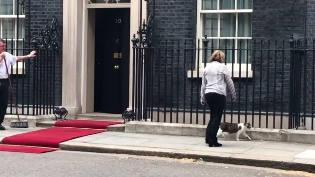 downing street staff take larry the cat inside before the arrival of juan carlos varela the president of panama - downing street stock-videos und b-roll-filmmaterial