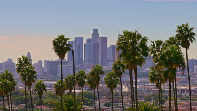 downtown los angeles - city of los angeles stock videos & royalty-free footage