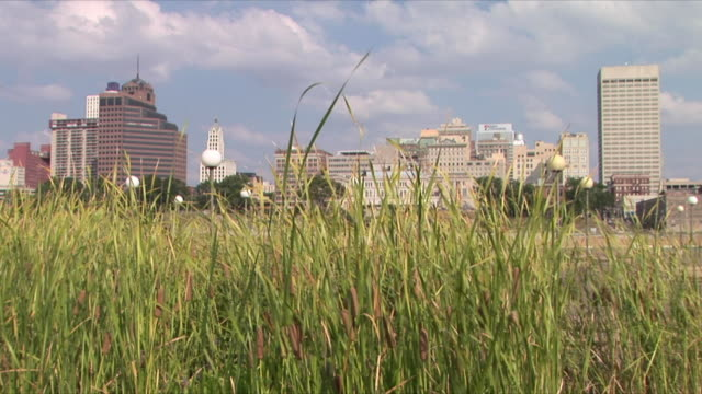 ws downtown memphis skyline through cattail from mud island river park, memphis, tennessee, usa - memphis tennessee stock videos and b-roll footage