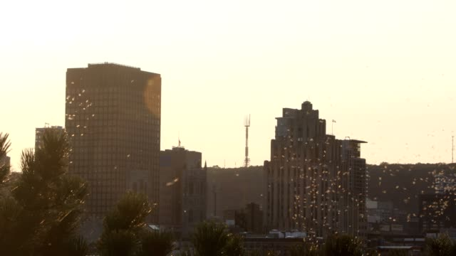 downtown montreal 4k video at sunset though treetops and caddisflies - vieux montréal stock videos & royalty-free footage