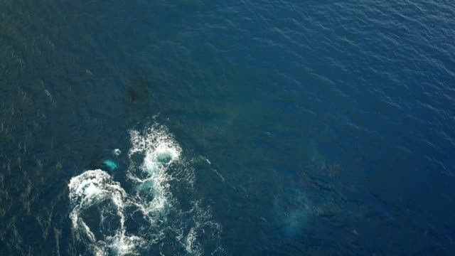 downward view of massive whales under surface of ocean - sperm whale stock videos & royalty-free footage
