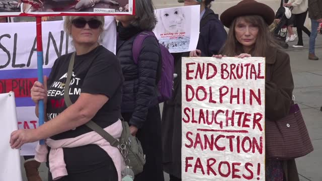 dozens of activists on saturday rallied in london to protest the killing of hundreds of dolphins on denmark's faroe island as part of a... - cetacea stock videos & royalty-free footage