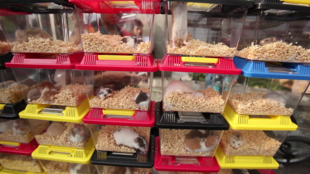 Dozens of hamsters and snakes stacked in plastic cages.