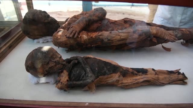 dozens of mummified mice were among the animals found in a tomb dating back more than 2000 years unveiled by the antiquities ministry with the aim of... - antiquities stock videos & royalty-free footage