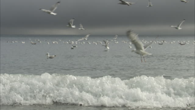 dozens of seagulls fly above incoming waves. - sea water bird stock videos & royalty-free footage