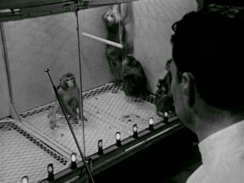 dr. jose delgado observing macaques monkeys w/ brain implants in glass cage, male hands holding transmitter control box, monkey backing up & jumping.... - scientific experiment stock videos & royalty-free footage