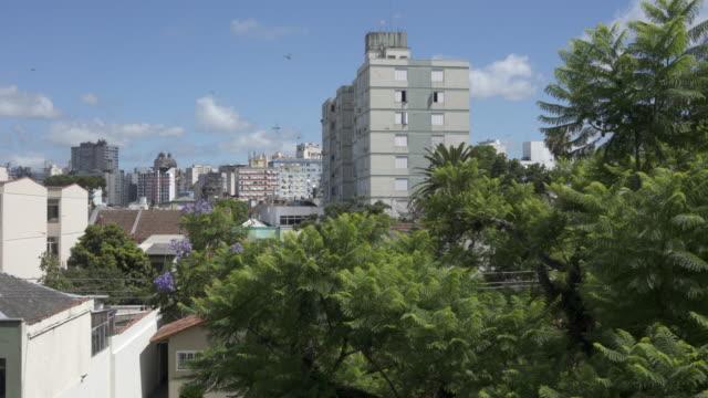 dragon flies flying in porto alegre,  southern brazil - bundesstaat rio grande do sul stock-videos und b-roll-filmmaterial