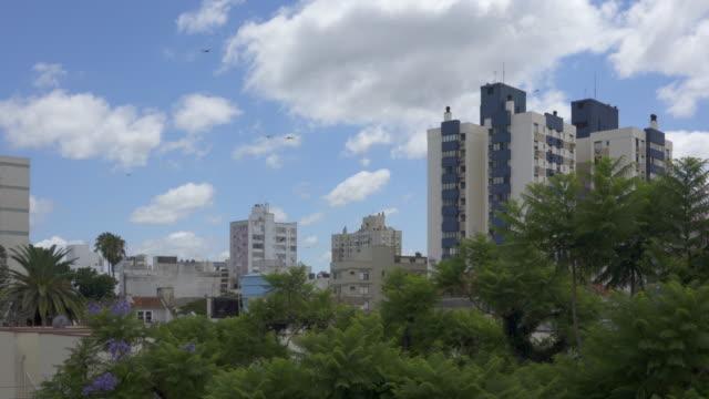 dragon flies flying in porto alegre,  southern brazil - alegre stock videos & royalty-free footage