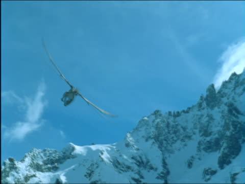 a dragon flies in circles over snow-covered mountains attracting another dragon. - 竜点の映像素材/bロール