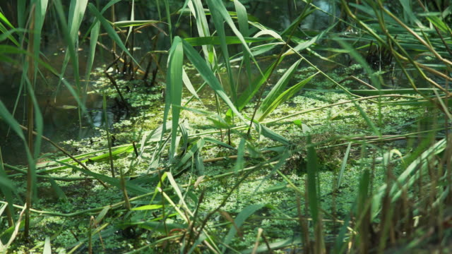 dragonflies fly around pond - pond stock videos & royalty-free footage