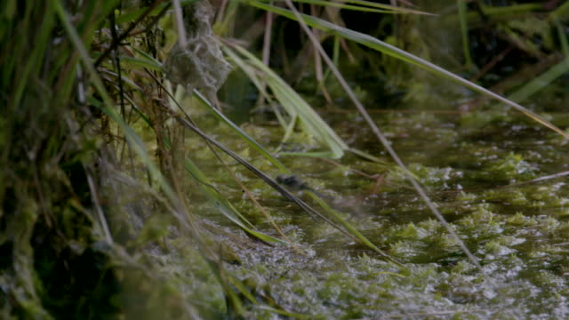 dragonflies (species unknown) over water preparing to mate, south downs - サウスダウンズ点の映像素材/bロール