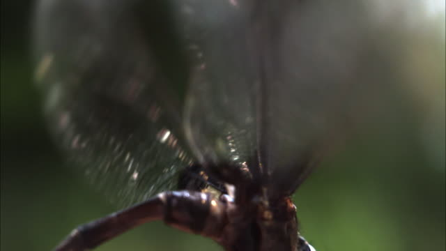 a dragonfly beats its wings in slow motion. - gliedmaßen körperteile stock-videos und b-roll-filmmaterial