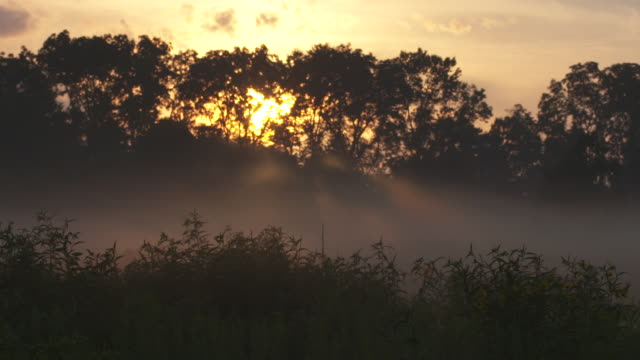 Dragonfly flies by Foggy Prairie Sunset Beam
