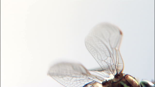 a dragonfly flutters its wings. - gliedmaßen körperteile stock-videos und b-roll-filmmaterial