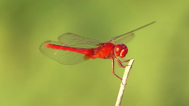 dragonfly flying slow motion - dragonfly stock videos & royalty-free footage