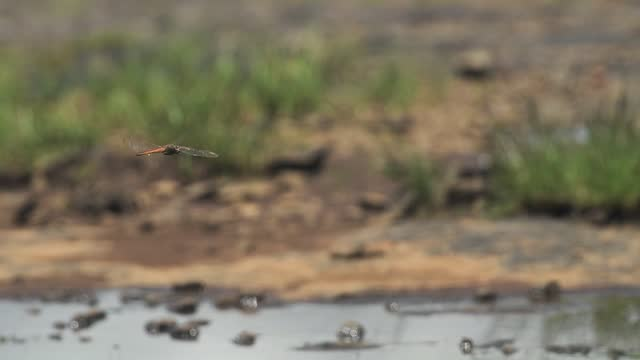 a dragonfly flying steadily in its place with blurry wilderness background in kenya - medium shot - hovering stock videos & royalty-free footage