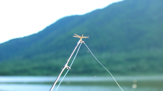 Dragonfly Hanging on Fishing Rods with River in Background