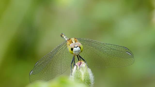 libelle in der natur. - gliedmaßen körperteile stock-videos und b-roll-filmmaterial