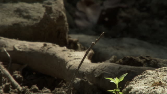 Dragonfly lands on twig.