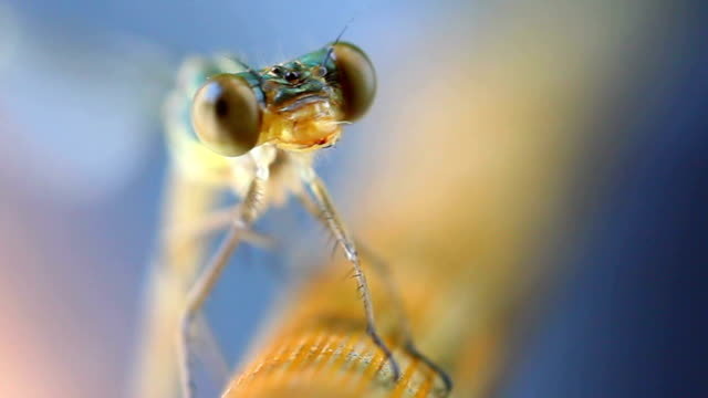 dragonfly macro portraits - saturated colour stock videos & royalty-free footage