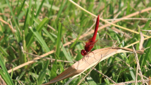 dragonfly on grass - sideways glance stock videos & royalty-free footage