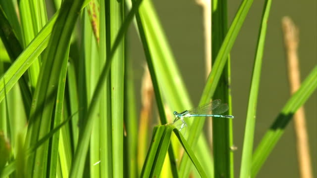 hd - dragonfly sitting and hovering - hovering stock videos & royalty-free footage