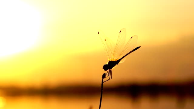 dragonfly slow motion - dragonfly stock videos & royalty-free footage