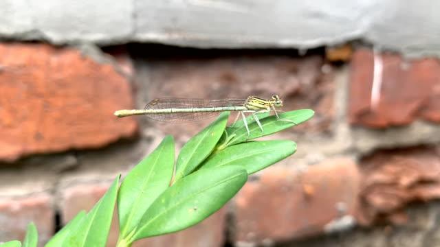 vídeos de stock e filmes b-roll de dragonfly - parte do corpo animal