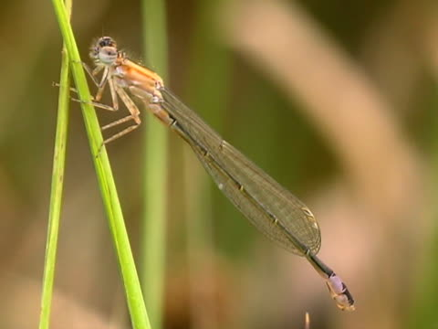 dragonfly - invertebrate stock videos & royalty-free footage