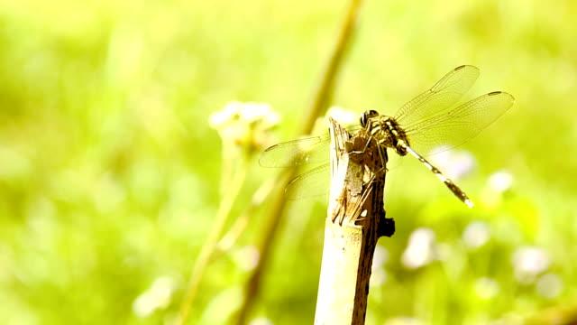 vídeos de stock e filmes b-roll de libélula - quatro objetos