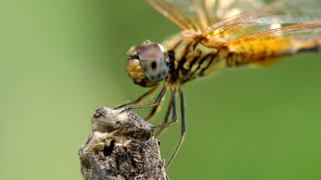 dragonfly - dragonfly stock videos & royalty-free footage