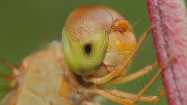 トンボの目 - 昆虫点の映像素材/bロール
