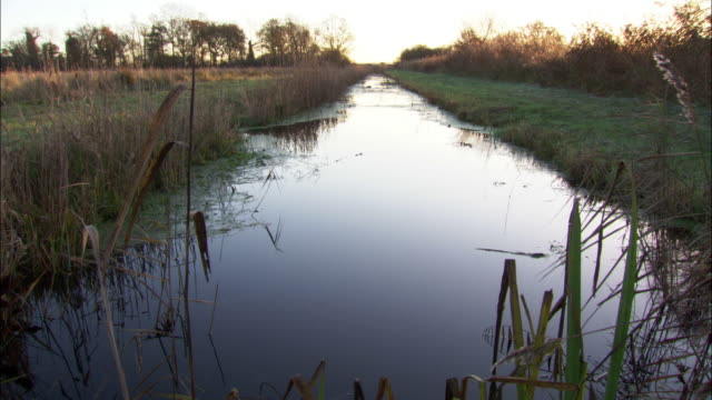 drainage ditch in fenland, cambridgshire, uk - fen stock videos and b-roll footage
