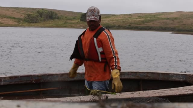 ms drakes bay oyster bay employee unloading freshly caught oysters drakes bay oyster co workers sort freshly harvested oysters on july 10 2014 in... - oyster shell stock videos & royalty-free footage