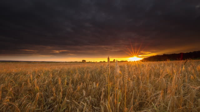 t/l dramatic cloudscape over a field of wheat at sunset - crop stock videos and b-roll footage