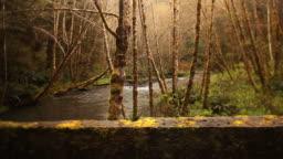 Dramatic Redwoods, river, bridge, dolly nature background