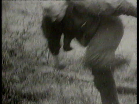 dramatic scenes of people running through barbed wire fence / man jumping out building window into net on ground / crowd of west berliners watching... - 1961 stock-videos und b-roll-filmmaterial