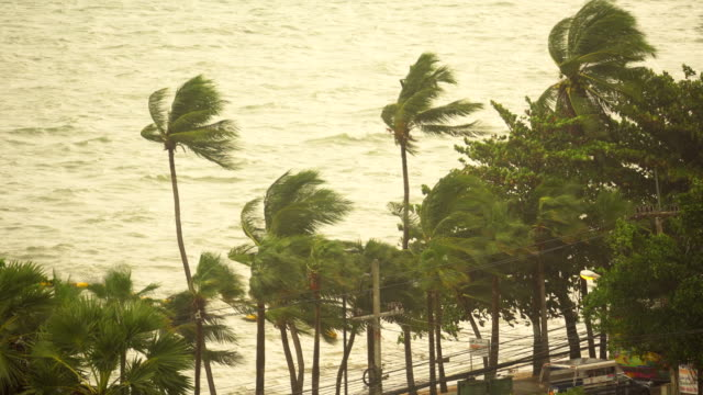 dramatic seascape rain strom and coconut trees - swaying stock videos & royalty-free footage