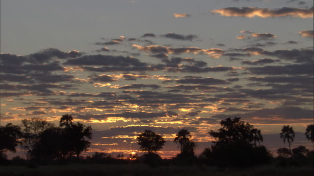 A dramatic sky silhouettes trees on the Okavango Delta. Available in HD.