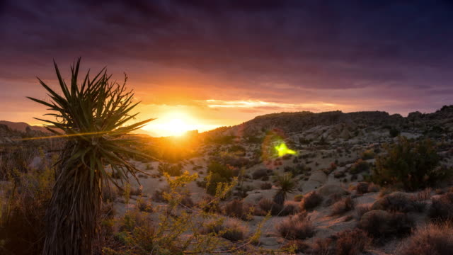 dramatic sunrise at joshua tree - time lapse - joshua tree national park stock videos & royalty-free footage